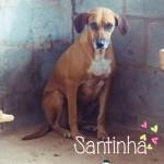Santinha